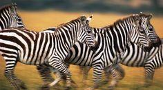 Photo safari in Tanzania