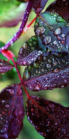 #dewdrops by M. Vasquez