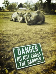 Closer to Rhinos at the Cotswold Wildlife Park