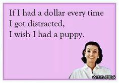 dollar-everytime-distracted-wish-i-had-puppy-ecard