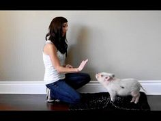 How to Train a Mini Pig to Stay