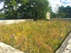 The buzzing green roofs of the Abbey Road estate all alive with bees and other pollinators thanks to a Buglife project completed in 2010 Green Roof Benefits, Living Roofs, Green Roofs, Abbey Road, Air Pollution, Health And Wellbeing, Urban Design, Cities, London