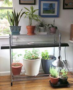 My indoor garden for under $100 with IKEA stuff