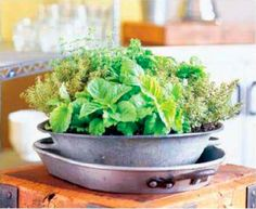 Your 10 Most Versatile Herbs