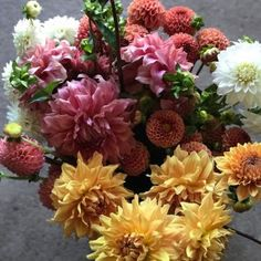 You saved to 2020 - Farmer Florist: Masters Workshop in LynnVale Workshops August & ~ the farmer florist: masters workshop Growing Flowers, Cut Flowers, Permaculture Design, Seasonal Flowers, Flower Farm, Planting Seeds, Color Theory, Natural World, Art Education