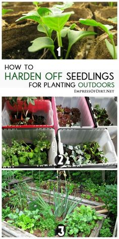 How to harden off seedlings for planting outdoors for a successful veggie and flower garden Greenhouse Plants, Small Greenhouse, Garden Plants, Pallet Greenhouse, Backyard Greenhouse, Greenhouse Ideas, Veg Garden, Organic Gardening, Gardening Tips