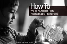 How To Make Nutrient-Rich Homemade Plant Food