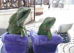 Trending GIF lizards