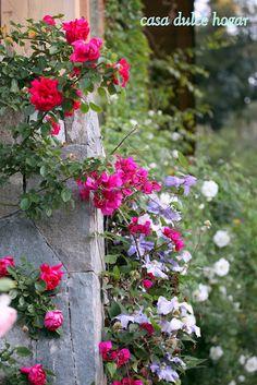 high society roses and buganvilia