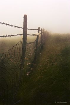 Fog and fence