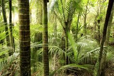 Photo about Lush green tropical forest interior. Image of flora, rain, trunks - 3815676 Water Pond, Tropical Forest, Small Trees, Lush Green, Native Plants, Backyard Landscaping, Cactus Plants, Gardening Tips, New Zealand