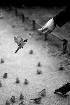 black-and-white:  (by sweet rrramona)  Something powerful about this picture. Like the little birds below are like whoa what are you doing man you can't trust humans, but he/she took a leap anyway. Nice.