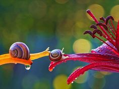 Macro photography by Ukrainian photographer Vyacheslav Mishchenko