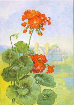 old fashioned geranium | Geranium Flowers 1920s Country Cottage Garden Old Fashione ...