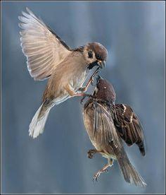 by Gennady Petrov Little Birds, Love Birds, Beautiful Birds, Funny Animals, Cute Animals, Wild Animals, Bird Wings, Backyard Birds, Bird Feathers