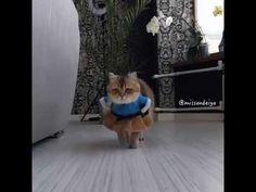 https://youtu.be/fLrsJHzkBHQ  Кошка в платье от кутюр идет на кухню - смешное видео из сети.