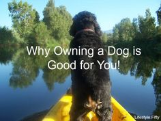 Why Owning a Dog can be Good For You. Make Mine a Cocker Spaniel! - Lifestyle Fifty