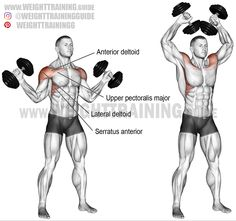 Dumbbell w-press exercise instructions and video Dumbbell w-press. An isolation exercise. Synergists: Lateral Deltoid, Upper Pectoralis Major, Supraspinatus, Serratus Anterior, and Middle and Lower Trapezius Weight Training Workouts, Gym Workout Tips, No Equipment Workout, Workout Plans, Fitness Equipment, Shoulder Workout Routine, Full Body Workout Routine, Deltoid Workout, Workout Exercises
