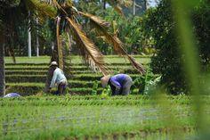 Photo Rice fields by Stefan Mahlknecht on 500px