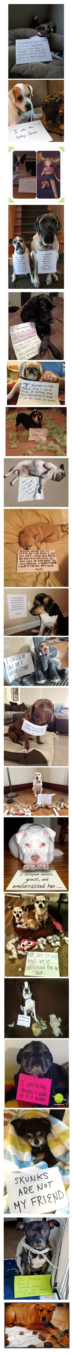 The best of dog shaming - The black dog playing dead has the perfect face expression LOL