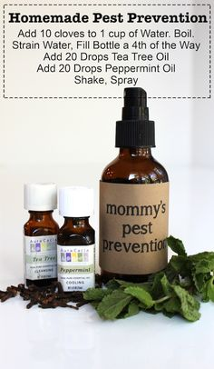 Homemade Pest Prevention: keep the kids lice-free with this all-natural spray...Just in case. you never know.......