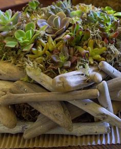 Danny On….Foolproof Plants