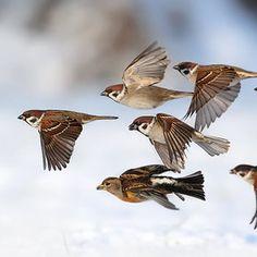 wauw..Sparrow