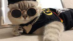 1,848 отметок «Нравится», 48 комментариев — Mr.Maison and Miss Carrie (@maison.carrie) в Instagram: «Наше видео на #цветнастроениячёрный 🖤 Участвуем в конкурсе @egorkreed @fkirkorov Сохраняй видео,…» Sunglasses, Fashion, Moda, Fashion Styles, Sunnies, Fashion Illustrations, Fashion Models, Shades, Eyeglasses