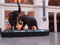 Elephants at the museum in Chicago