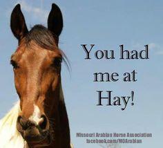 You had me at HAY!