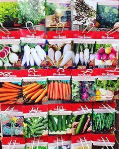 Qual é a fruta legume ou vegetal que você mais consome? SUPER DICA: compre esses envelopes de sementes e teste plantar na sua casa. Funciona! Por aqui tenho alface tomate espinafre brócolis camomila alecrim hortelã cebolinha cenoura e orégano. Tudo está em vaso #apt  by buqueorganico http://ift.tt/1WjXZO2