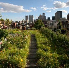 dakwaarde / green roof