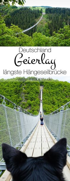 Geierlay Bridge in Hunsrück is the longest cable suspension bridge of 360 meters .The Geierlay Bridge in Hunsrück is the longest cable suspension bridge of 360 meters . Suspension Cable, Suspension Bridge, Places To Travel, Places To See, Travel Destinations, Europa Tour, Excursion, Wanderlust Travel, Germany Travel