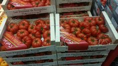 Marmande Tomato from the South West of France