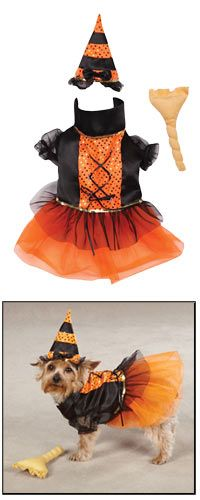 This looks like a site that's worthy of supporting. (They have an awesome online store that carries much more than just pet supplies.) Casual Canine® Spellhound Witch Dog Costume at The Animal Rescue Site