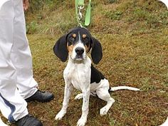 #GEORGIA #URGENT ~ 13D-2224 is a young hound girl in need of a loving #adopter / #rescue at FLOYD COUNTY ANIMAL CONTROL   431 Mathis Road SE   #Rome GA   30161  Ph 706-236-4537  broomej@floydcountyga.org  Out of state #rescues needing help contact  hope@hope4dogs.net &  rondawoman22@aol.com &  rescue4floyd@yahoo.com