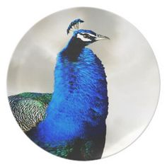 A proud peacock dinner plate