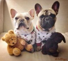 Oct. 28, 2014: Plush Animal Lovers Day. A day that most dogs will be happy to celebrate…as they unstuff them!