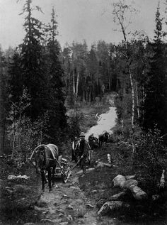 The Road to Karelia, Photo by I. Old Pictures, Old Photos, History Of Finland, Kola Peninsula, Birches, Strange Photos, History Of Photography, My Land, Marimekko