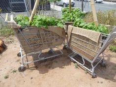 Shopping carts!
