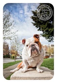 Elvis - April 24 - Bulldog