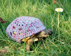 {tortoise or turtle cozy!} so utterly in love. If I ever have a turtle I'm getting someone to make me one of these ;)