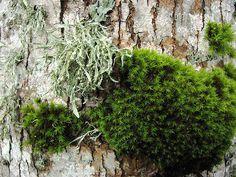 lichen & moss