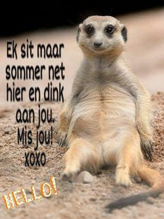 Good Morning Greetings, Good Morning Wishes, Morning Messages, Night Quotes, Morning Quotes, Qoutes About Love For Him, Lekker Dag, Wedding Poems, Afrikaanse Quotes