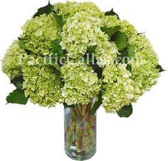 wedding flower arrangements with hydrangeas | Green Hydrangeas