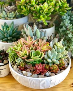 "Judy M G🌵🌼 on Instagram: ""Thankful for a blissful Thursday with these succies❤️🧡💛💚#succulove #succulentlover #ilovesucculents #succulente #succulentarrangement…"" Succulent Arrangements, Succulents Garden, Bloom Where You Are Planted, Pot Plants, Garden Deco, Terraria, Nature Decor, Shelf Ideas, Go Green"