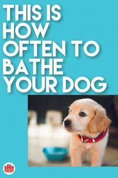 Top Best house Dog Wash Station Ideas. *** Check into this quality article. Training Your Puppy, Dog Training Tips, Potty Training, Puppy Care, Pet Care, Bathing A Puppy, Puppy Shampoo, Cheap Pet Insurance, Dog Grooming Tips