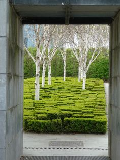 Boxwood and Birch, Parc André Citroën, Paris, France. A wedge-shaped parterre, developed in the is filled with block-shaped boxwoods deliberately clipped at irregular heights. Formal Gardens, Outdoor Gardens, Courtyard Gardens, Zen Gardens, Modern Gardens, Cottage Gardens, Small Gardens, Modern Landscaping, Garden Landscaping
