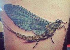 tattoo of mayfly by chad hunt i got at name brand tattoo tats pinterest mayfly tattoo and. Black Bedroom Furniture Sets. Home Design Ideas