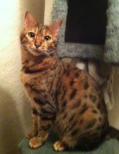 My cat Rio. Kay, Boulder, CO. 11/19/2014.
